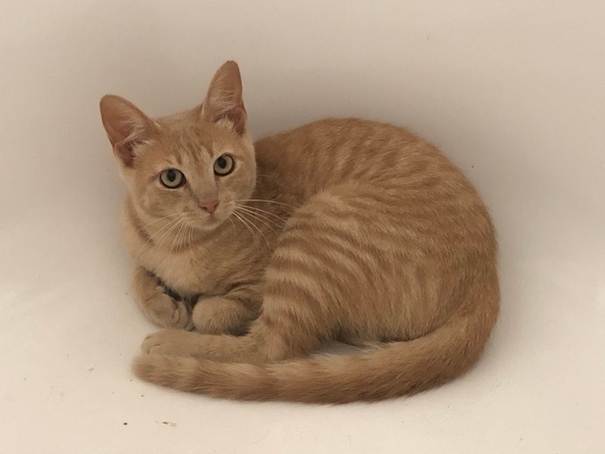 cats - Buttercup Image 0