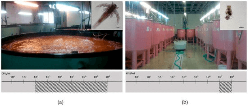 Fig 3 — Facilities for live feed production from a commercial fish farm unit