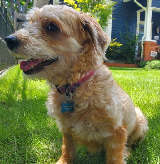 dogs - Benny Image 0