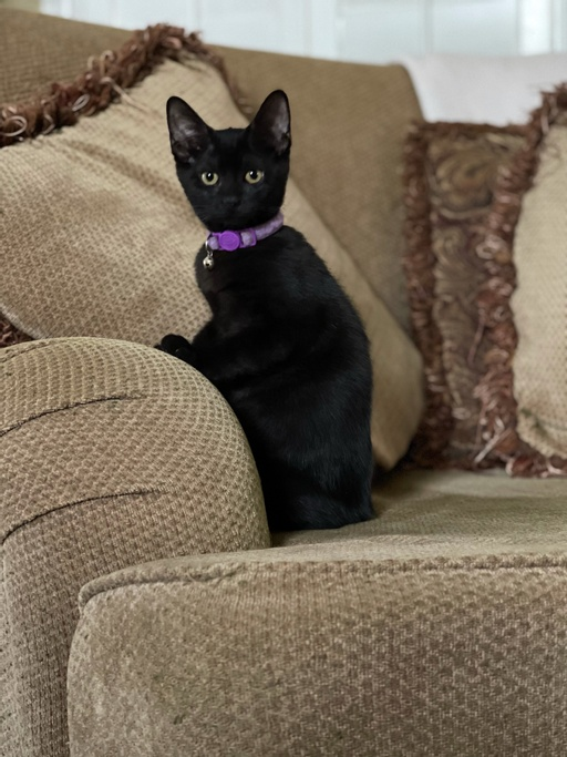 cats - Addy Image 11
