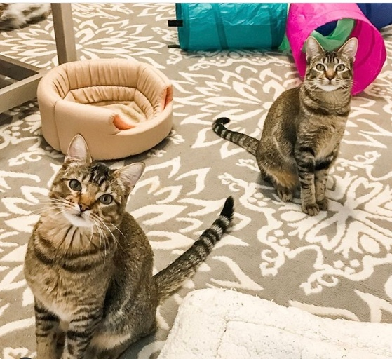 cats - Lilly Image 2