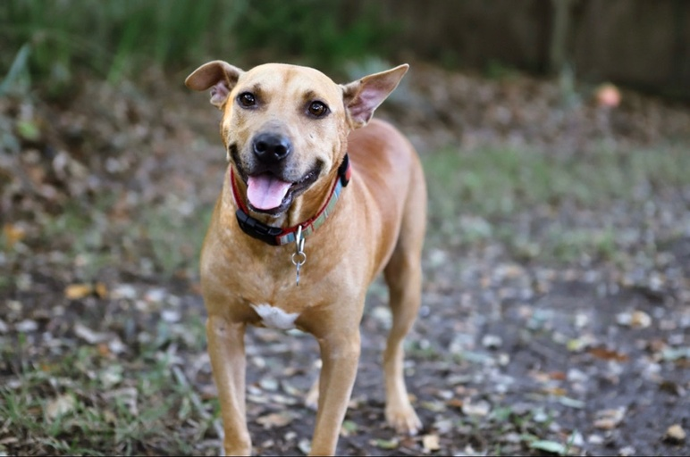 dogs - Sidney Image 11