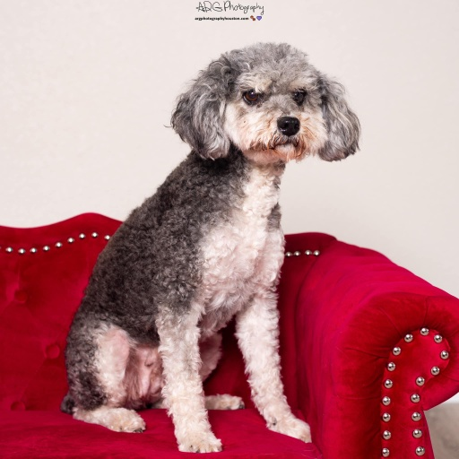dogs - Maddie Image 3