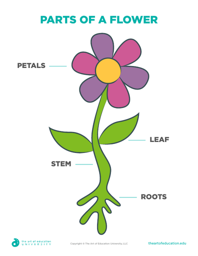 Parts Of A Flower - FLEX Resource