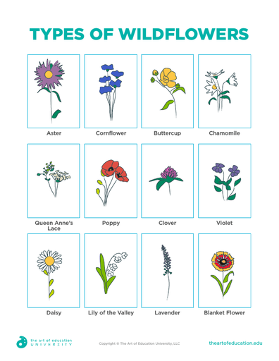 Types of Wildflowers - FLEX Assessment