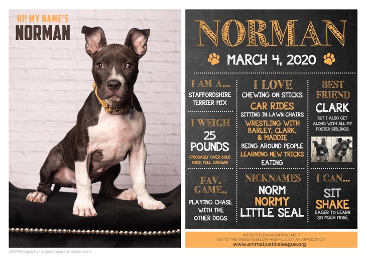 dogs - Norman Image 0