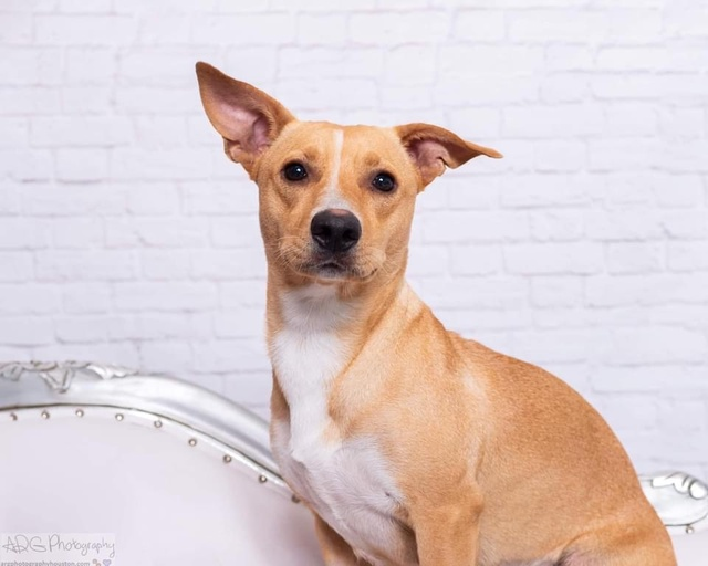 dogs - Coco Image 1
