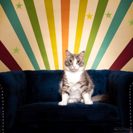 cats - Ollie Image 6