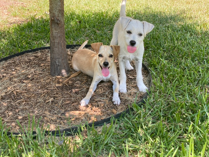 dogs - Charlotte  Image 0