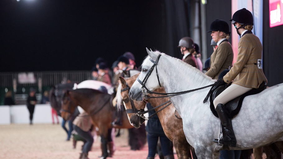 Your Horse Live: SEIB Search for a Star
