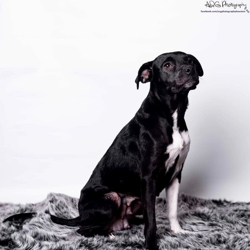 dogs - Willow Image 3