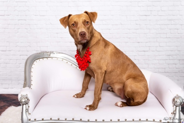 dogs - Dixie Image 1