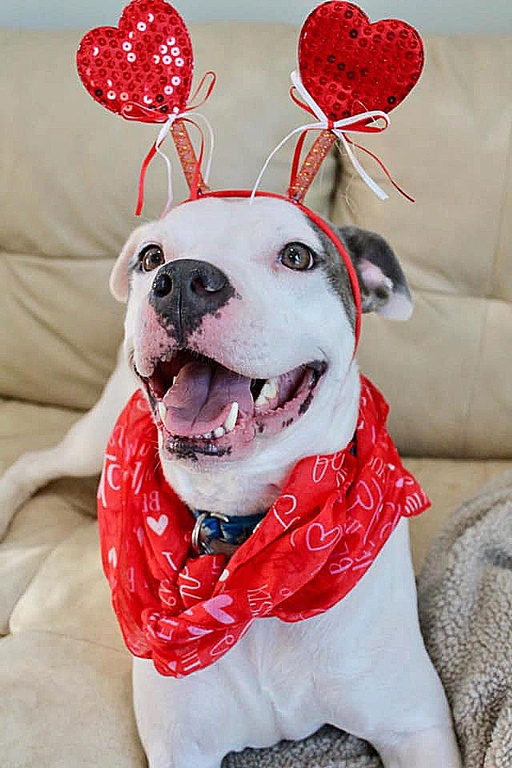 dogs - Pollo Image 1