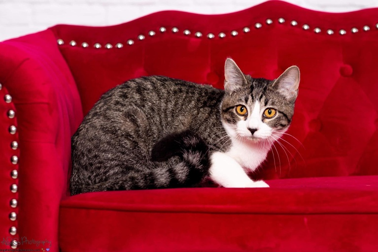cats - Berry Image 5