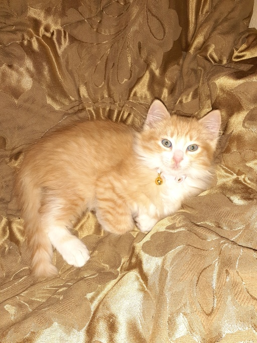 cats - Nugget Image 0