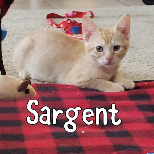 cats - Sargent Image 0