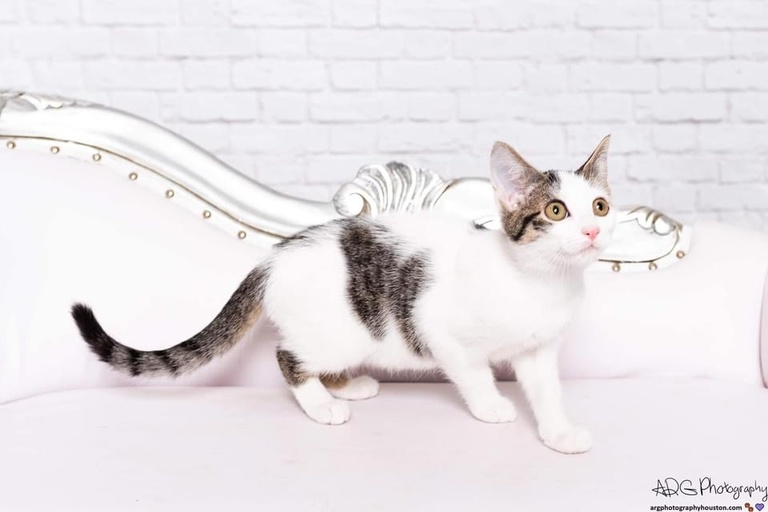 cats - Bee Image 0