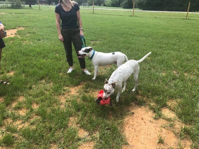 dogs - Pollo Image 5