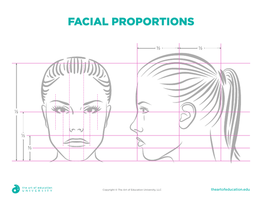 Facial Proportions – Female - FLEX Resource