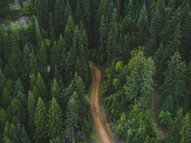 aerial view of dirt road cutting through a forest