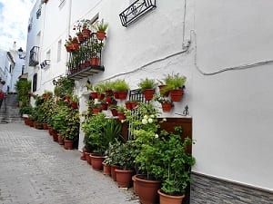 Potted colour in Solera, Spain