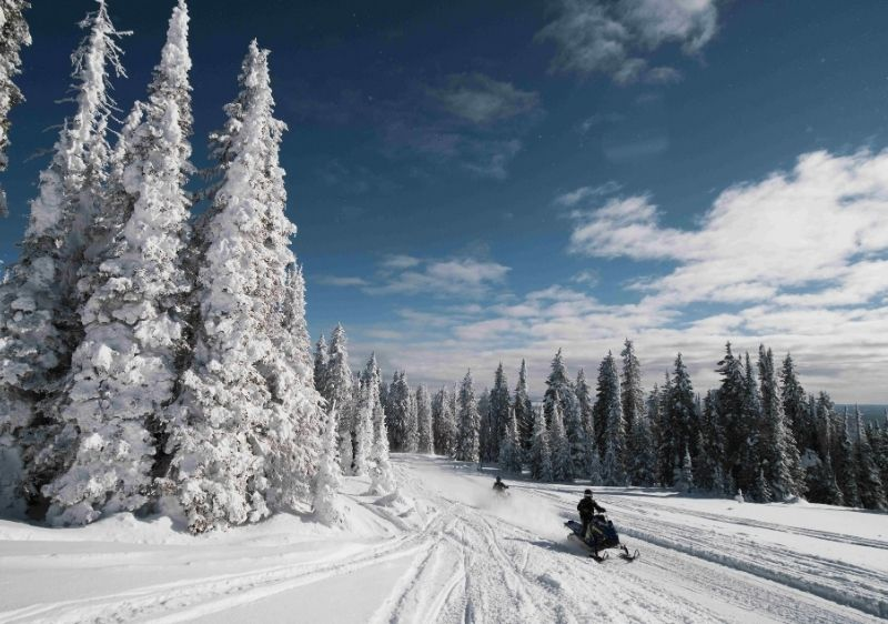 guests riding snowmobiles up a mountainside