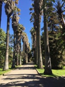 Palm tree lined paths inside the tropical botanical garden