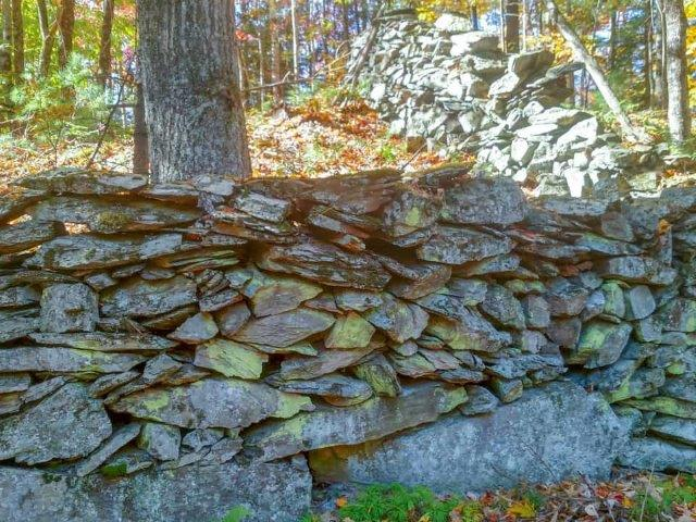 rock wall in the forest