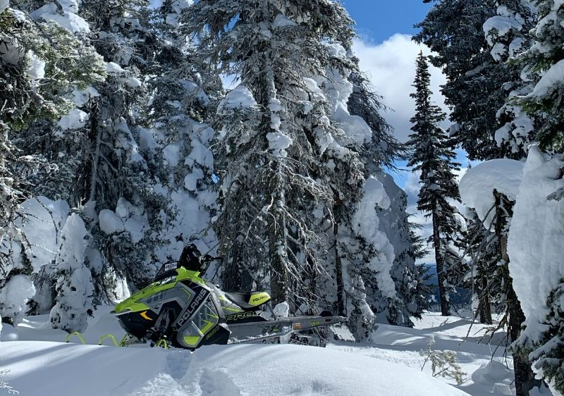 Polaris-snowmobile-parked-in-front-of-large-trees-covered-in-snow