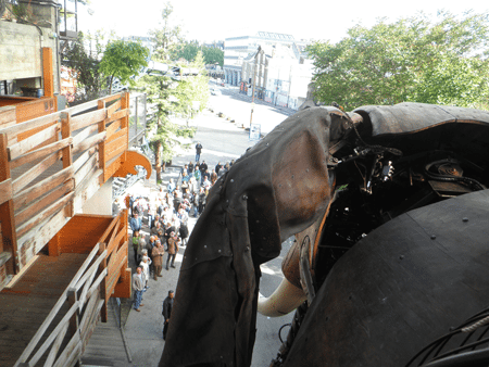 View from behind the Elephant's ears