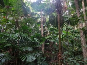 Trees and plants in the Daintree rainforest