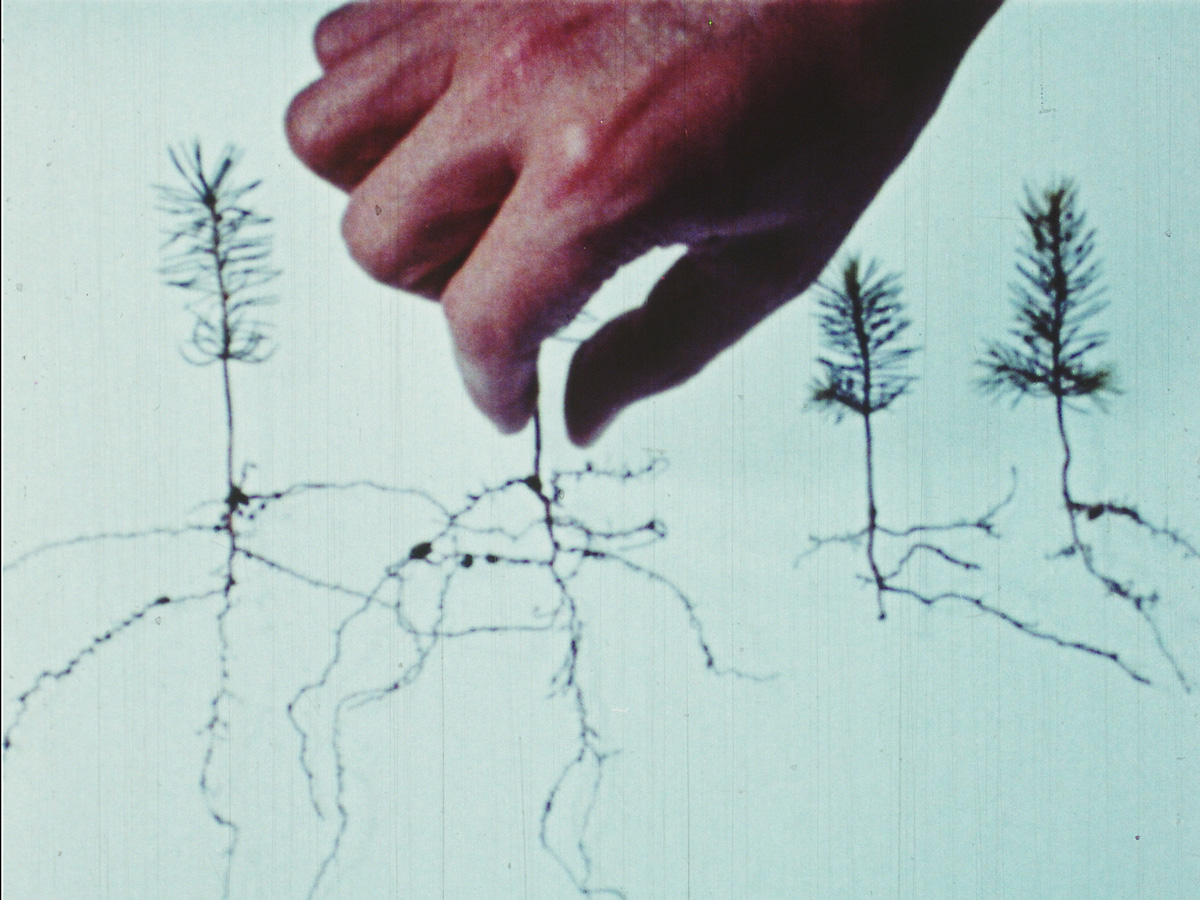 Four silhouetted plants with root systems visible, a hand reaching down to pinch one stem