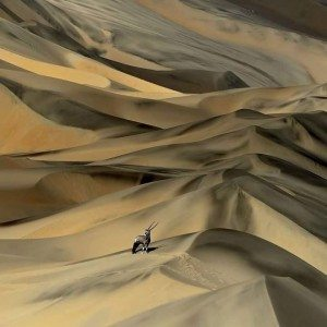 Orxy in dunes by I love Namibia