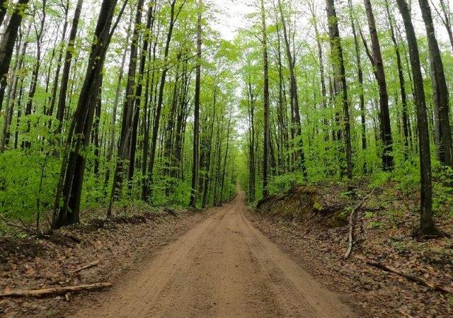 off-road dirt trail surrounded by tall trees