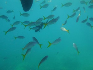 Following Fishes under the boat