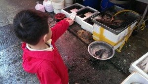 Fresh seafood to be sold at Sham Shui Po wet market.
