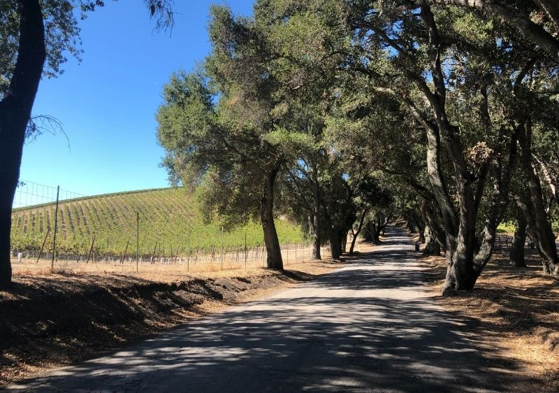 country road surrounded by wine country