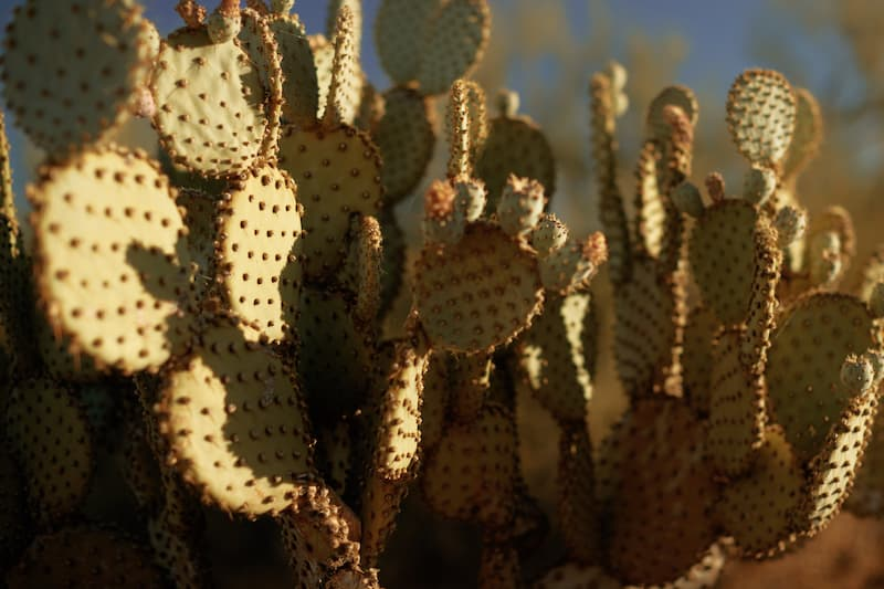 close-up of cactus-in-Arizona
