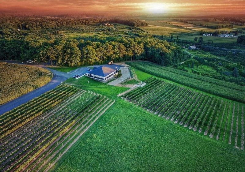 aerial-view-of-vineyards-in-Pocono-Mountains