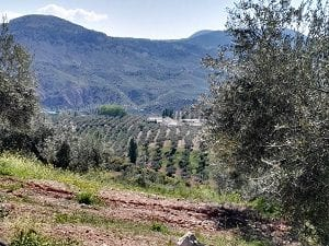 Across the olive groves on the Camino at Belmez de Moraleda, Sierra Magina, Spain