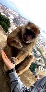 macaques up our rock