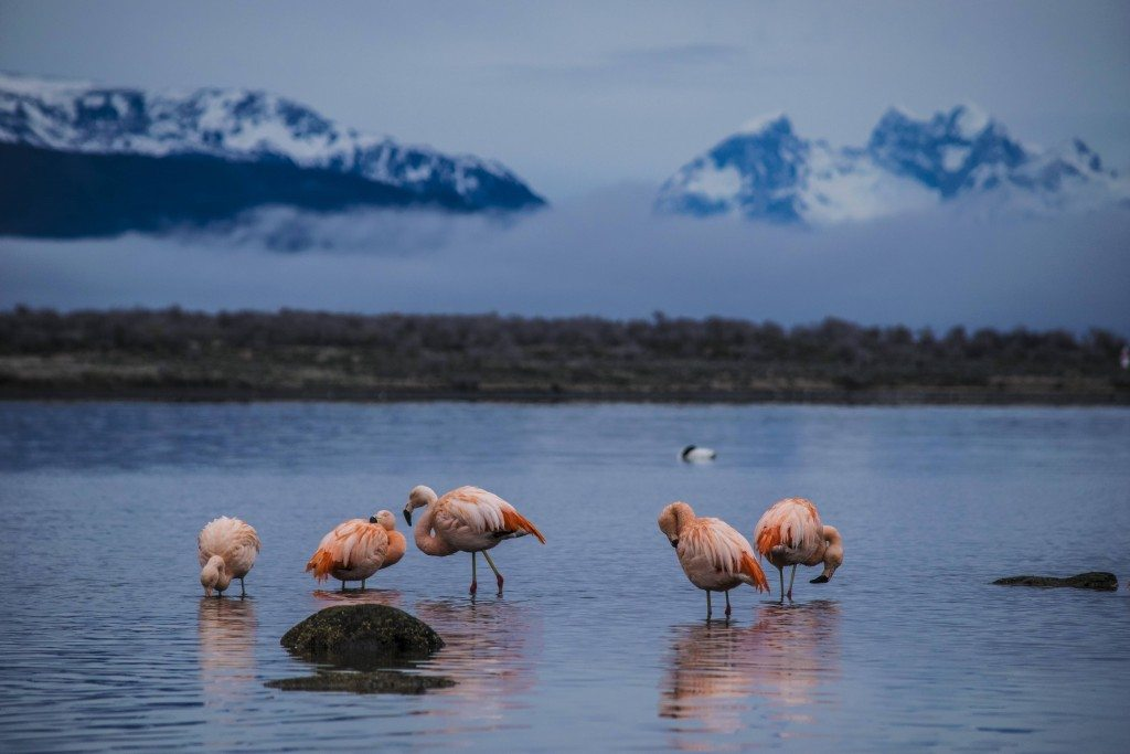South America, Patagonia, Chile