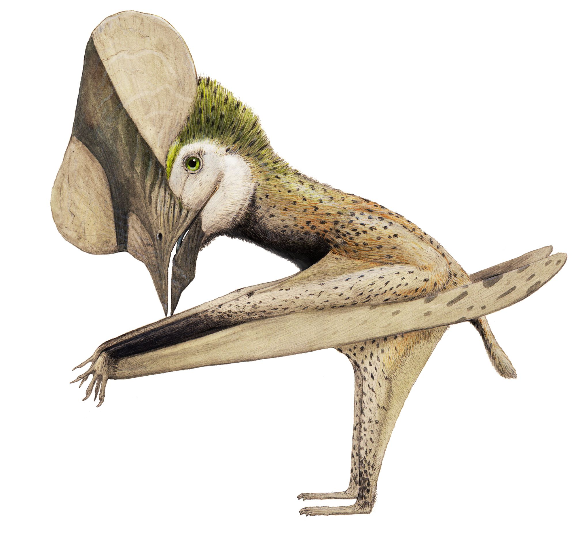 Huaxiapterus