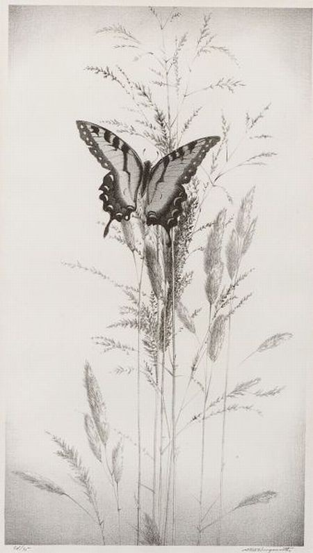 Butterfly by Stow Wengenroth