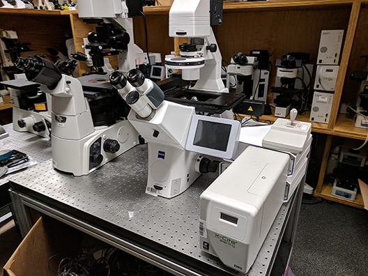 Zeiss Axio Observer Z1 Inverted Phase Contrast Fluorescent Microscope