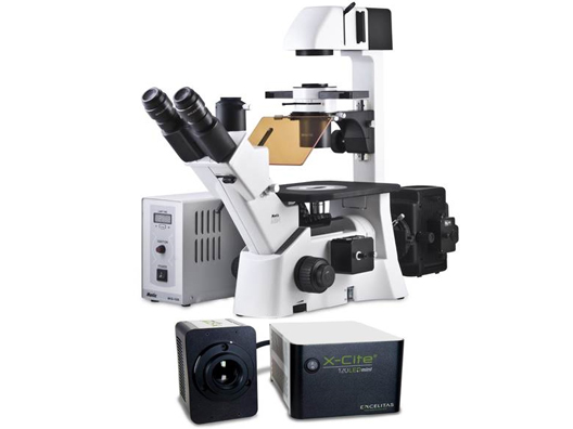 Motic AE31 Elite *NEW* Inverted Phase Contrast Fluorescent Microscope