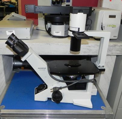 Olympus CKX31 Inverted Phase Contrast Microscope